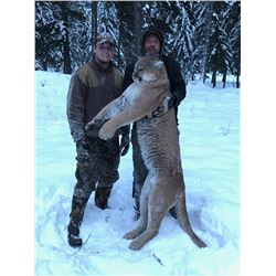 Montana Mountain Lion for 1 Hunter - $5,000