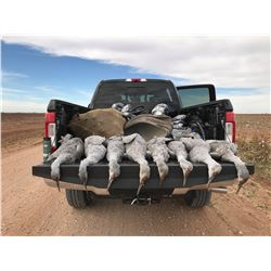 West Texas Sandhill Crane Hunt for 2 Hunters - $3,450 / Exhibitor