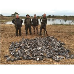 Argentina Eared Dove Hunt for 6 Hunters - $10,000