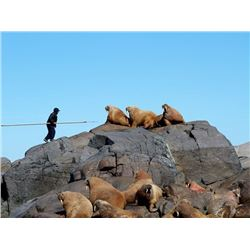 5 Day Guided Atlantic Walrus Nunavut Territory, Canada - $12,950