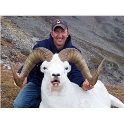 Alaska: Alaska Governor's Tok Management Area Dall Sheep Tag (DS102/DS103) for One Hunter