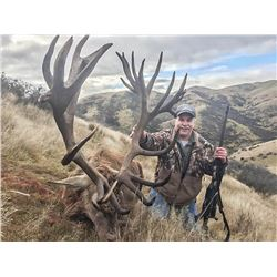 New Zealand: 3 Day Red Stag Hunt for 3 Hunters / Includes 3 Red Stags