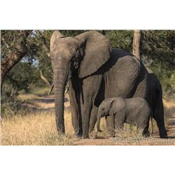 South Africa:10 Day Plains Game 1 Hunter & 1 Observer/Includes 3 Trophies or $3500 Trophy Fee Credit