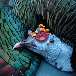 Mexico: 7 Day 6 Night Mexican Jungle Ocellated Turkey Hunt for Two Hunters