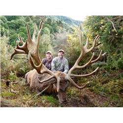 New Zealand: 5 Day 4 Night Red Stag Hunt for 2 Hunters / Includes 2 Red Stags up to 350 Points