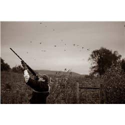Argentina: 4 Day 3 Night High Volume Eared Dove Hunt for 2 Hunters