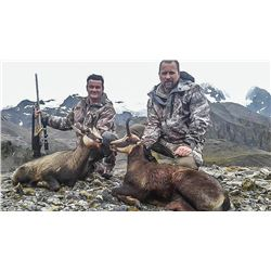New Zealand: 3 Day 3 Night Chamois Hunt for Three Hunters, Including the Trophy Fees for 3 Chamois