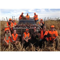 South Dakota: 3 Day 3 Night Pheasant Hunt for 4 Hunters