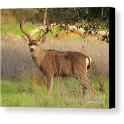 3 Day/2 Night Management Whitetail Deer 8 pt or less for One Hunter