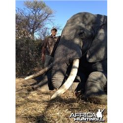 5 Day Non-Trophy, Non-Exportable Elephant Bull for One Hunter