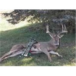 "3 Day Whitetail Buck Management Up to 145"" Hunt for One Hunter and One Guest + Mgt Doe"