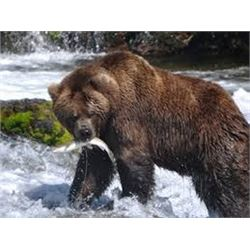 10 Day Grizzly & Black Bear Combo for One Hunter