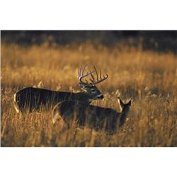 5 Day Semi-guided Trophy Whitetail Deer Hunt for One Hunter