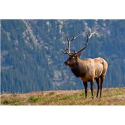 5 Day Rocky Mountain ELK Hunt for One Hunter