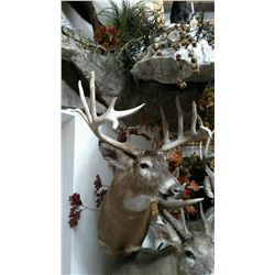 """2 Day Whitetail Buck Hunt (up to 160"""") for One Hunter and One Non-Hunter"""