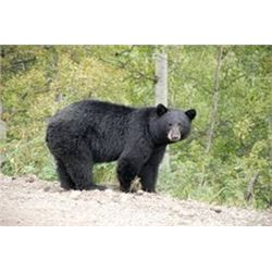 7 Day Black Bear Hunt for One
