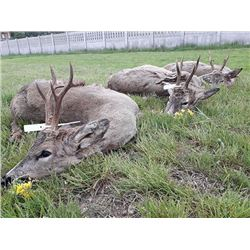 Serbia Roe Deer Hunt with European Hunting Adventures in 2019 or 2020