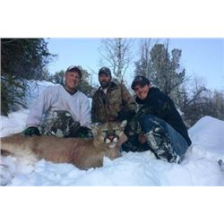 Utah Mountain Lion Hunt for 2 Hunters with Pine Valley Outfitters