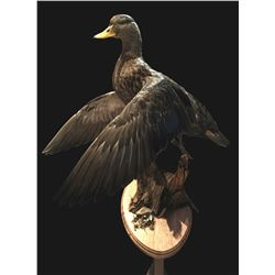 Waterfowl Mount from True-Life Taxidermy