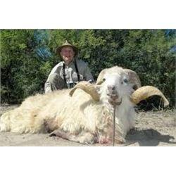 7-Day Argentinian TX Dall Ram, Multi-Horn