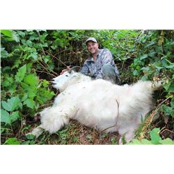 Alaska Mountain Goat Hunt