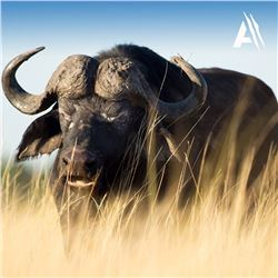 5-Day South Africa Cape Buffalo with Avula Safaris