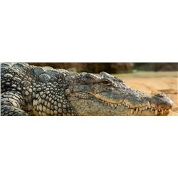 Africa Maximum Safaris 7 Day Nile Crocodile for 2 Hunters & 2 Observers