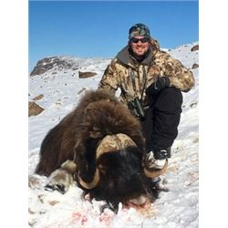 Muskox Hunt in Greenland