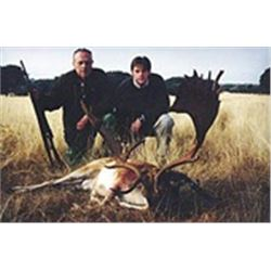 Trophy Roe Deer, Mouflon Sheep or Fallow Deer or Red Deer Hunt for 1 in Spain