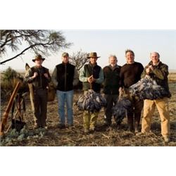 5-Day/4-Night High Volume Dove& Pigeon hunt in Argentina