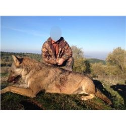 7-Day WOLF HUNT IN MACEDONIA