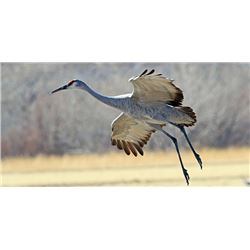 LA 6 - WEST TEXAS SANDHILL CRANE HUNT for TWO