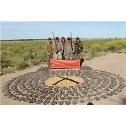 LA 18 - ARGENTINE WING SHOOTING - DOVE HUNT FOR FOUR HUNTERS