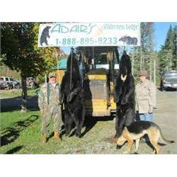 LA 28 – CANADIAN BLACK BEAR HUNT FOR TWO HUNTERS