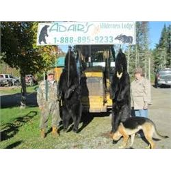 LA 28 - CANADIAN BLACK BEAR HUNT FOR TWO HUNTERS