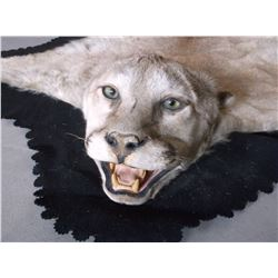 """Mountain Lion Rug- Matted- Good Condition- Nose To Tail 91""""- Across Front Legs 57""""- Across Back Legs"""