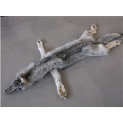 """Tanned Montana Wolf Hide- Good Fur - Feet and Claws Left On- Nose to Tail 80"""""""