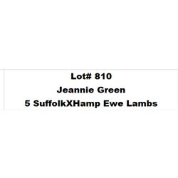 Lot 810 - Jeannie Green  - 5 head of Suffolk X Hamp Ewe Lambs