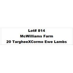 Lot 814 - McWilliams Farm  - 20 head of Targhee X Cormo Ewe Lambs