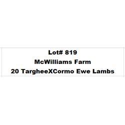 Lot 819 - McWilliams Farm  - 20 head of Targhee X Cormo Ewe Lambs