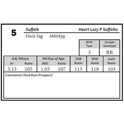 Lot 5 - Suffolk