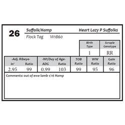 Lot 26 - Suffolk/Hamp