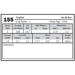 Lot 155 - Targhee