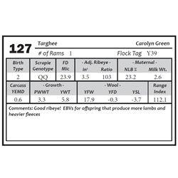 Lot 127 - Targhee