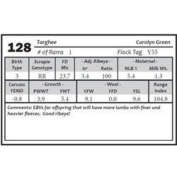 Lot 128 - Targhee