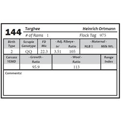 Lot 144 - Targhee
