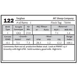 Lot 122 - Targhee