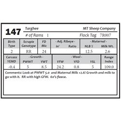 Lot 147 - Targhee