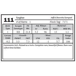 Lot 111 - Targhee