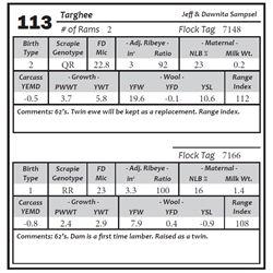 Lot 113 - Targhee